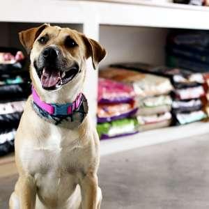 Como funciona a contabilidade para pet shop?